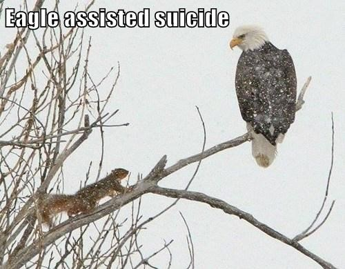 Eagle assisted suicide
