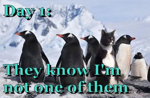 disguise,FAIL,penguins,Cats,funny