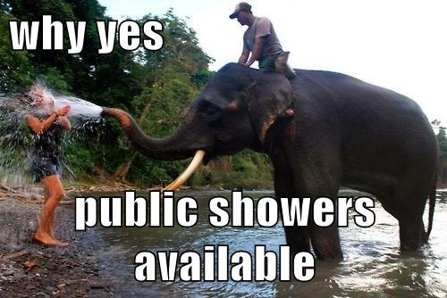 yikes,elephants,showers