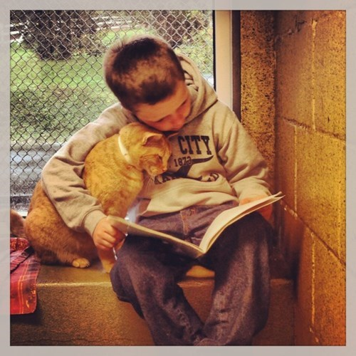 "Kids Read to Cats With the ""Book Buddies Program"""