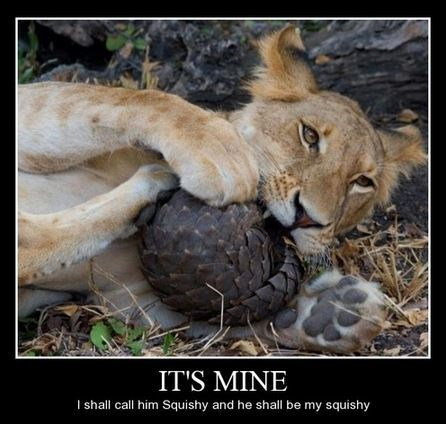 lions,pets,squishy,names,funny,animals