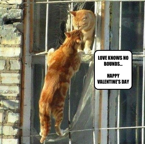 LOVE KNOWS NO BOUNDS...  HAPPY VALENTINE'S DAY