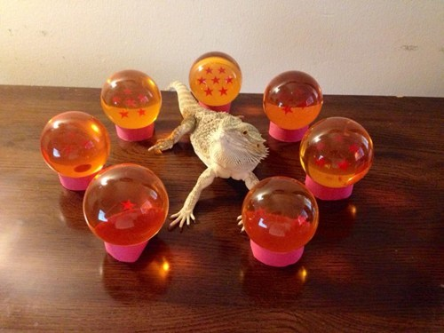 Summoning Shenron