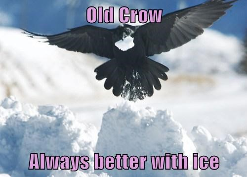 drinking,crows,puns,ice