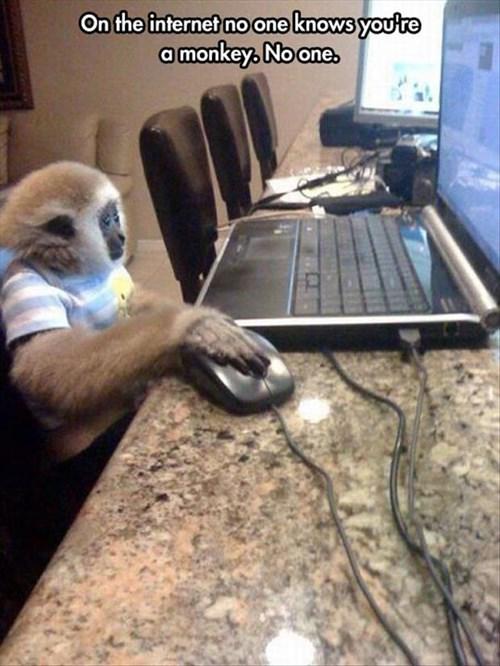 monkeys,secret,internet