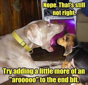 Baying Lessons from One Dog to Another