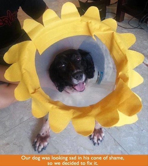 dogs,cone of shame,cute,funny