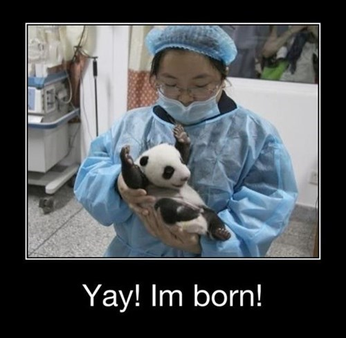 Babies,panda,cute