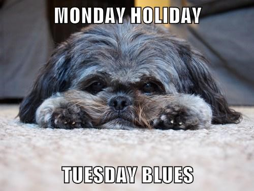 MONDAY HOLIDAY  TUESDAY BLUES