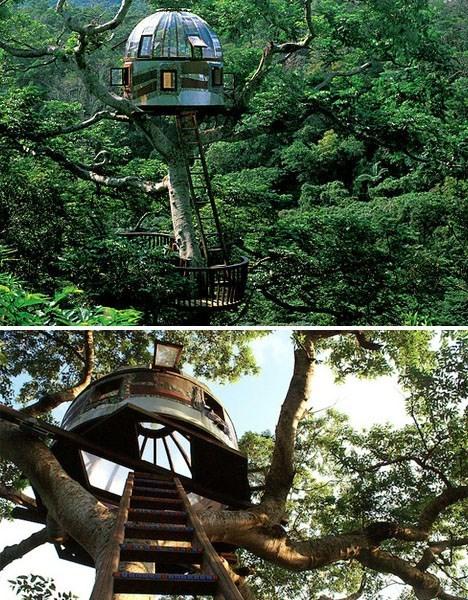 architecture,design,tree house