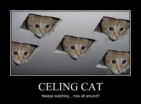 CELING CAT