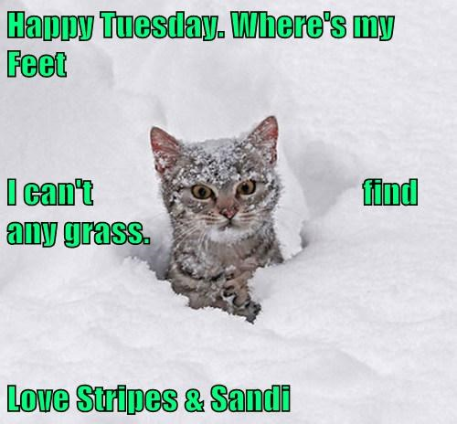 Happy Tuesday. Where's my Feet I can't                                          find any grass. Love Stripes & Sandi