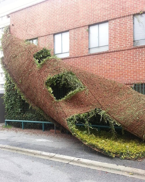 Photo of the Day: A Building Shedding a Plant Like a Snake
