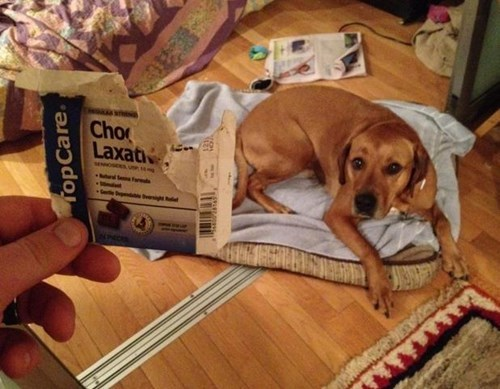 dogs,whoops,eat,laxatives