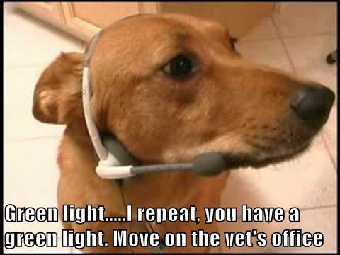 Green light.....I repeat, you have a green light. Move on the vet's office