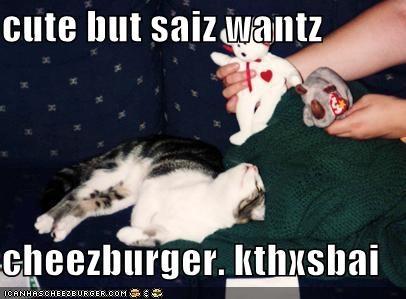 cute but saiz wantz  cheezburger. kthxsbai