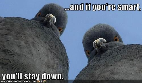 This is Why I Don't Feed the Pigeons...