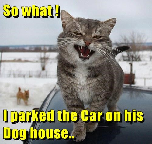So what !  I parked the Car on his Dog house..