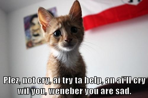 Plez, not cry, ai try ta help, an ai'll cry wif you, weneber you are sad.