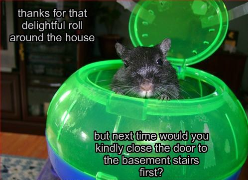 Said Every Hamster With A Hamster Ball...