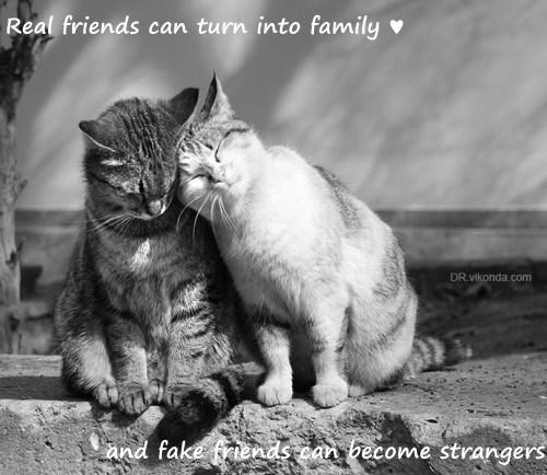 Real friends can turn into family ♥  and fake friends can become strangers