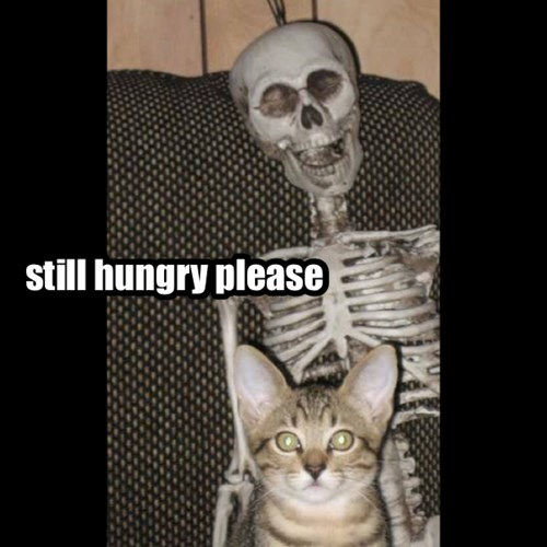 still hungry please