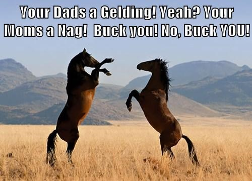 Your Dads a Gelding! Yeah? Your Moms a Nag!  Buck you! No, Buck YOU!