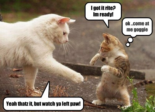 Kitteh boxing lessons