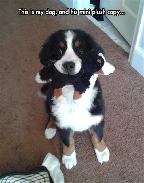 so cute,Babies,dogs,toys