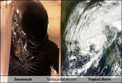 Zenomorph Totally Looks Like Tropical Storm