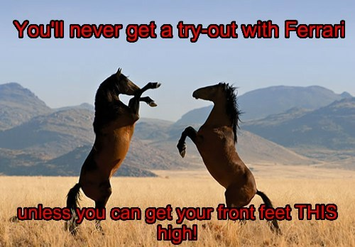 cars,ferrari,funny,horses