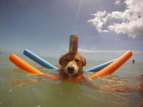 Too Cool to Swim