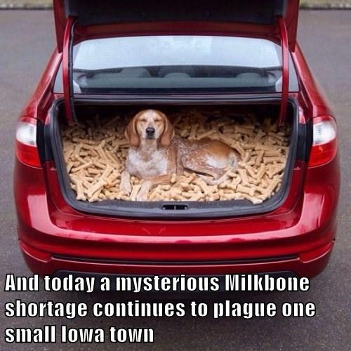 And today a mysterious Milkbone shortage continues to plague one small Iowa town