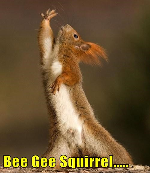 Bee Gee Squirrel.....