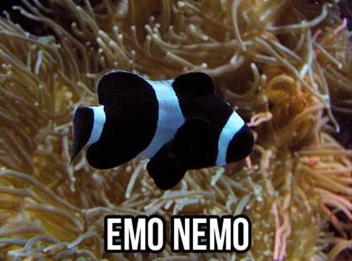 emo,fish,finding nemo,puns