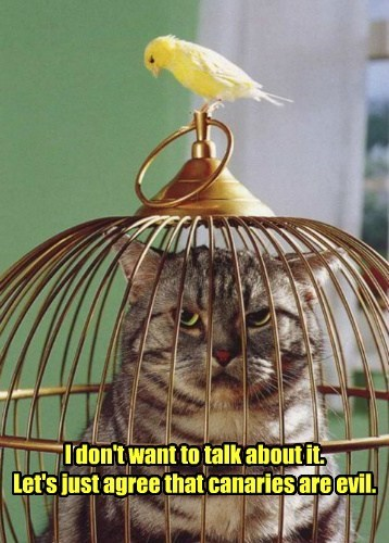 I don't want to talk about it. Let's just agree that canaries are evil.
