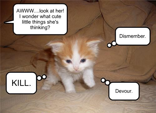 Kitten's first thoughts.