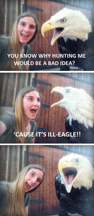 bad puns,eagles,jokes,funny
