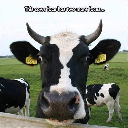 amazing,cows,electric company,funny,TV