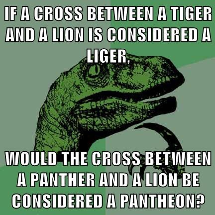 IF A CROSS BETWEEN A TIGER AND A LION IS CONSIDERED A LIGER,  WOULD THE CROSS BETWEEN A PANTHER AND A LION BE CONSIDERED A PANTHEON?