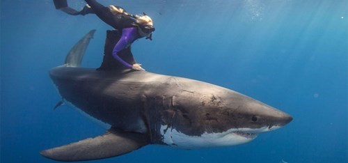 Ocean Ramsey (Actual Not-Made-Up Name) Dives With the Sharks Because She's Totally Rad. Oh, and to Raise Awareness About Shark Extinction.