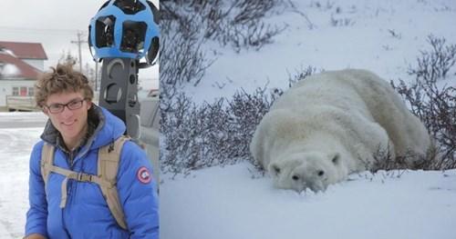 google maps,polar bears,international polar bear day