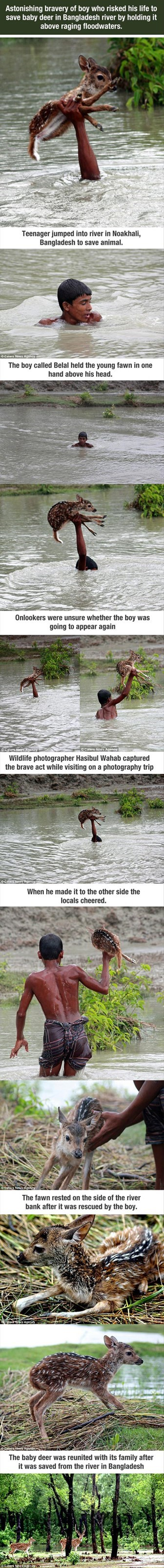 A Heartwarming Account of a Baby Deer in Distress