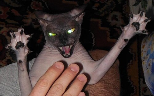 This is What Happens If Your Cat Actually Catches the Laser...