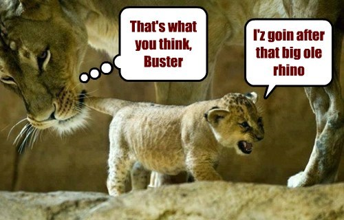 Moms--the reason lions aren't extinct