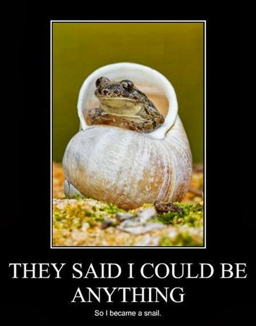 dreams,snail,funny,animals,frogs