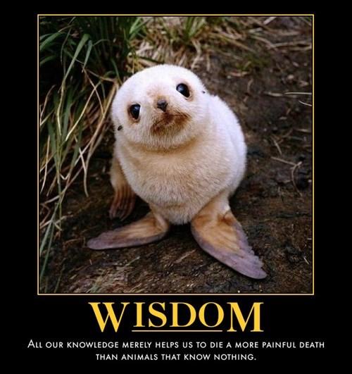 sentience,wisdom,funny,animals