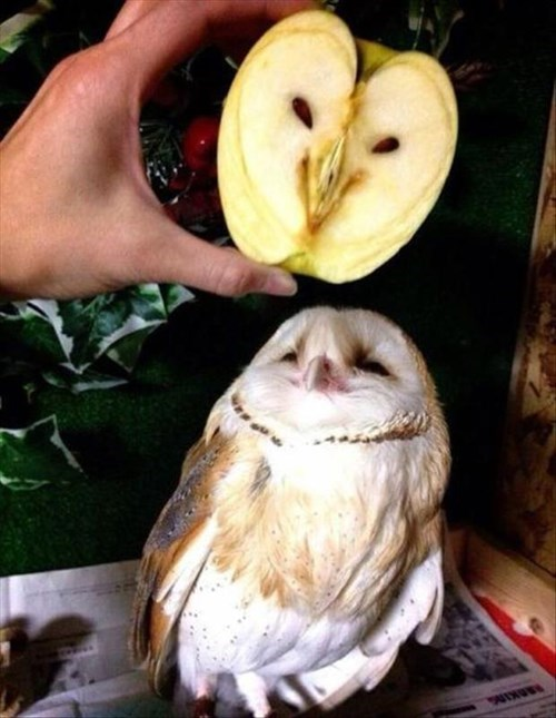 Owl be Happy to Share My Apple With You