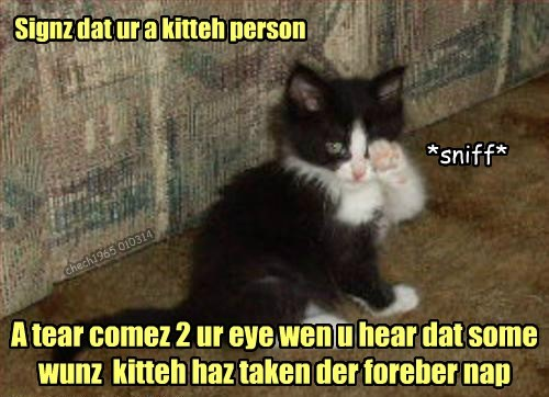 Signz dat ur a kitteh person