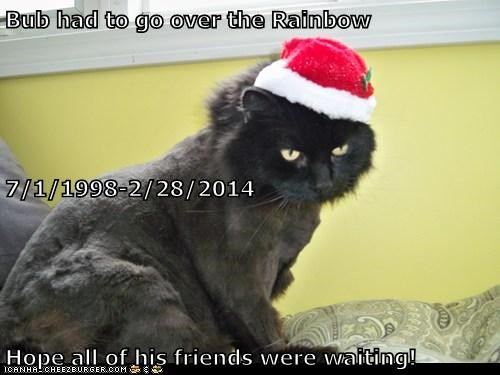 Bub had to go over the Rainbow 7/1/1998-2/28/2014 Hope all of his friends were waiting!